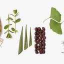 La-Biosthetique-Botanique